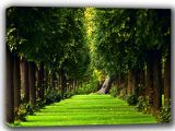 Tree-Lined Woodland Path Canvas. Sizes: A4/A3/A2/A1 (002271)